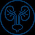 Urology icon